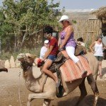 Photo Gallery Camel Ride Israel Tours