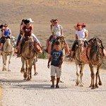 Photo Gallery Negev Camel Ride